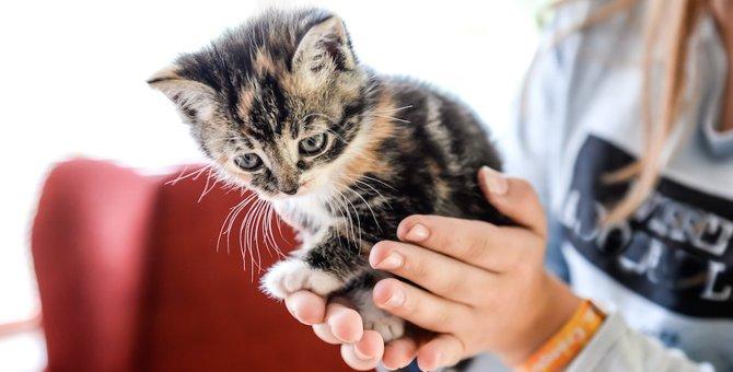 もし子猫が助けを求めてきたら、どうしますか?