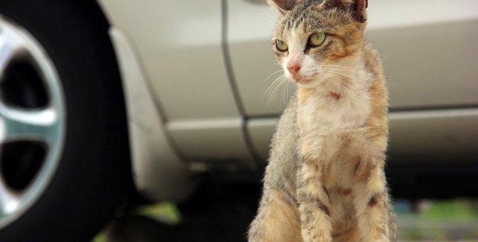 コンビニの駐車場にいる猫にしてはいけないこと3つ
