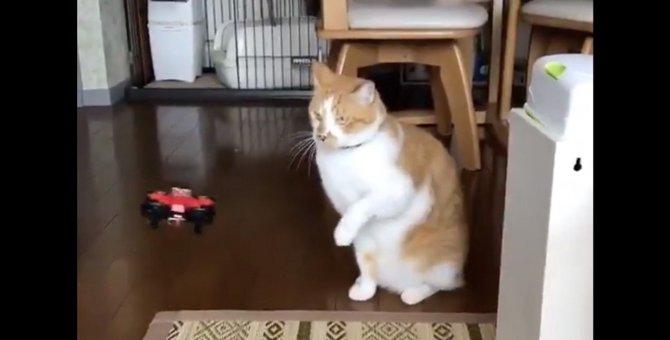 配備したい!特殊部隊のオファー殺到しそうなドローン撃退猫が話題