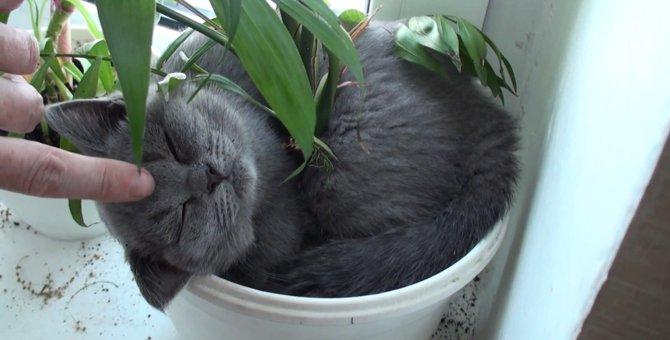 もっと寝てたいにゃぁ…植木鉢でお昼寝してた子猫ちゃん