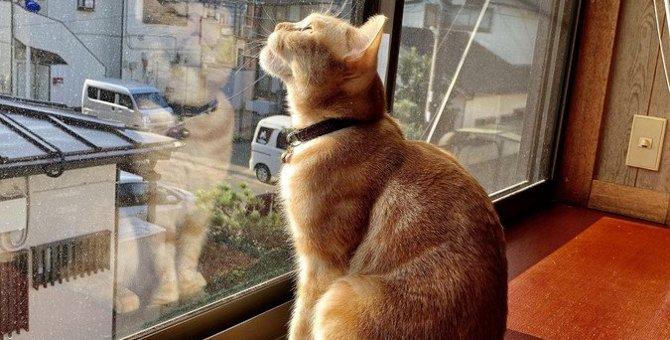 愛猫の名前を呼んでも無視される3つの原因