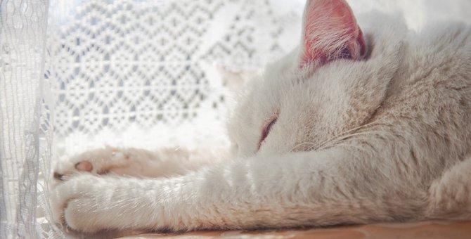 猫の熱中症対策グッズのおすすめ5選!暑さ対策の仕方も紹介