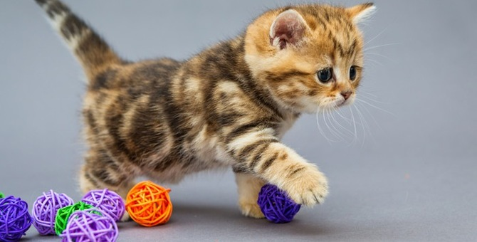 猫が好むボールのおもちゃの選び方とおすすめ商品