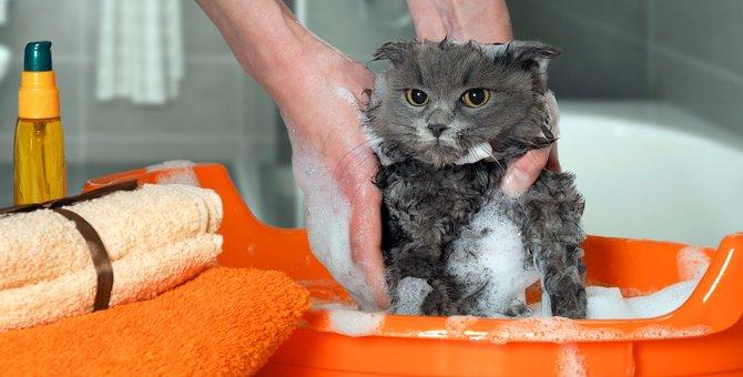 猫にお風呂が必要な時と嫌がる場合の対策