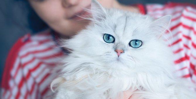 胸毛が立派な猫種6選