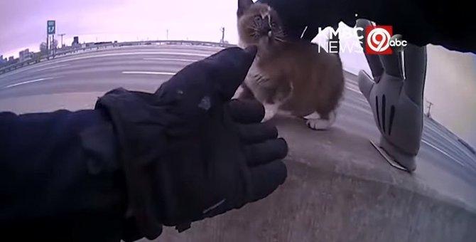 高速道路に子猫が!?お巡りさんの救出劇