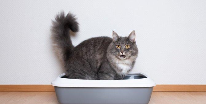 猫が『ウンチの前後に鳴く』時の意味3つ