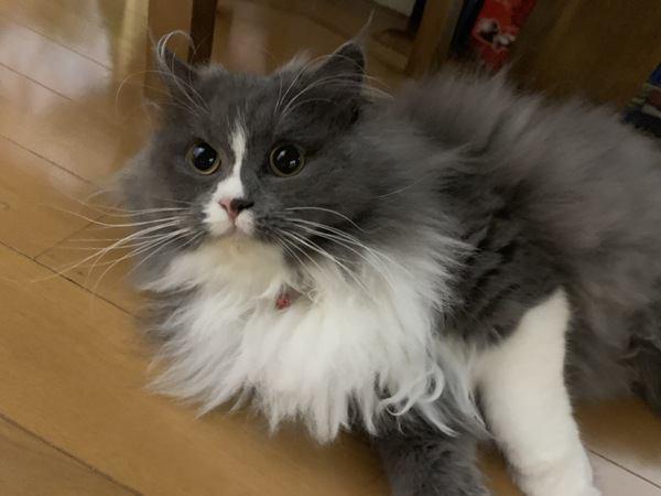 猫にブラッシングを好きになってもらう方法とは?