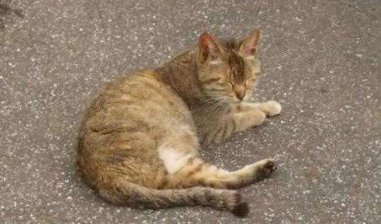 コンビニに捨てられ3本足で必死に子育てした猫の生き様
