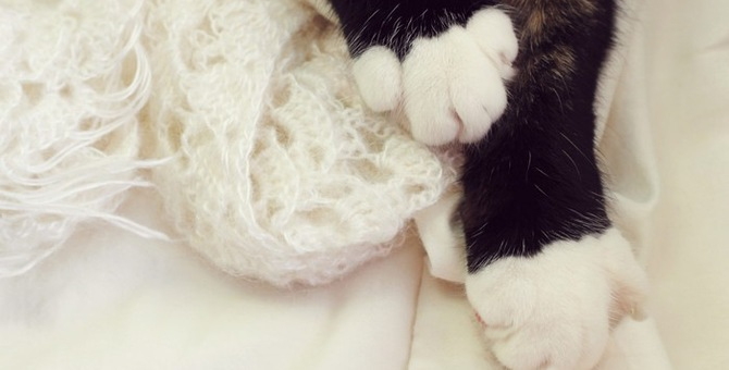 猫の靴下が白色だけな理由