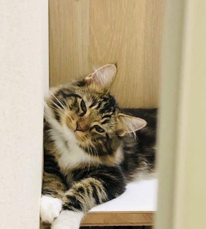 猫に『ごめんね』を伝える正しい方法4つ