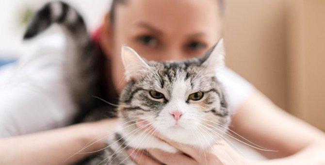 『絶対NG』な猫の叱り方3つ