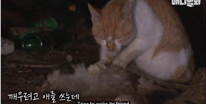 排水口のホームレス猫は、友の亡骸に寄り添っていた...