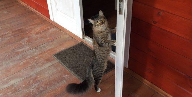 猫がドアノブに飛びついて開けちゃう!5つの防止策とオススメグッズ