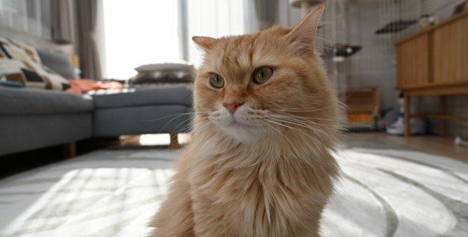 猫が気分を悪くする飼い主の『無自覚行動』5選!絶対すべきアフターフォローの方法とは?