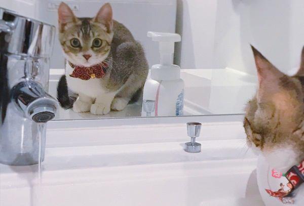 うっかり猫にやってしまうと危険な事7選