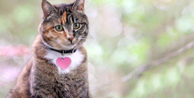 猫が首輪を嫌がる時はどうすればいい?試して欲しい3つの事