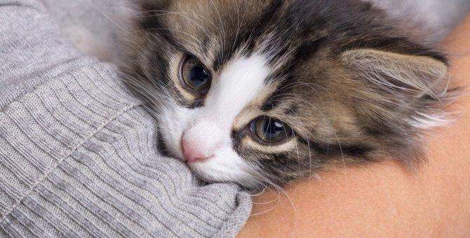 子猫にやってはいけない『NGな甘やかし方』5つ