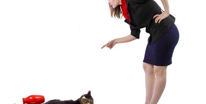 猫の上手な叱り方とNGな叱り方