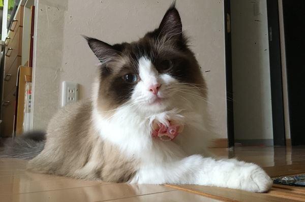 猫にシャンプーは必要?