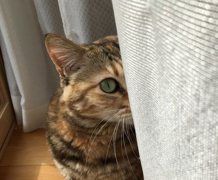 猫に嫌われていると感じる瞬間4選