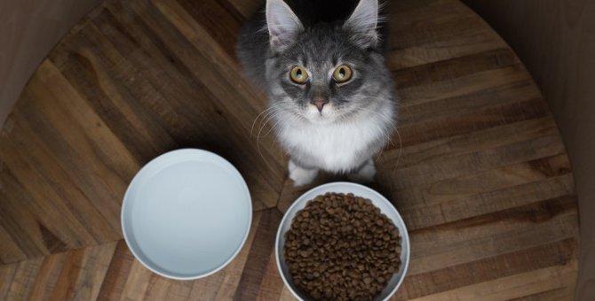 老猫がご飯を食べなくなってしまうNG食器3つ