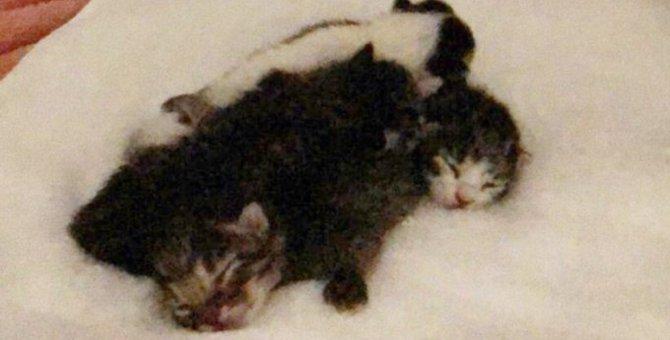熱海土石流で妊娠した猫を救出…小さな命を救う保護現場の様子は?