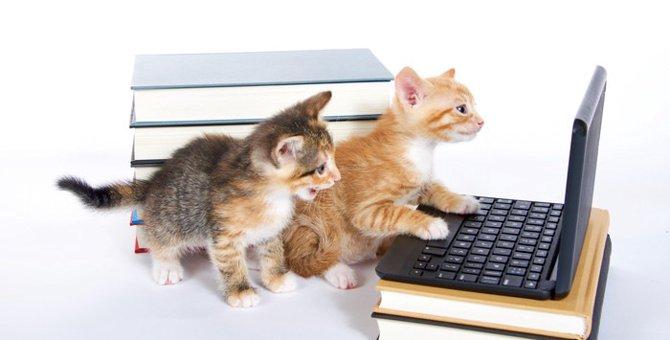 猫好きな作家たち11選