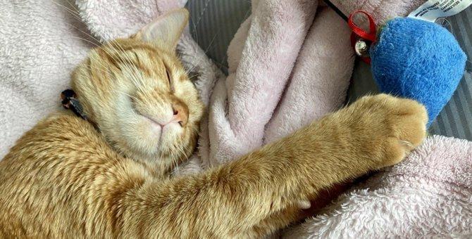 猫が『寝場所』を変えたときに考えられること5つ