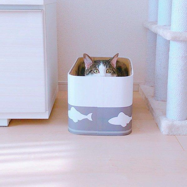 人見知りな猫のために飼い主がするべき気配り3つ