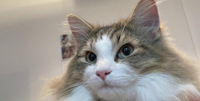 超カワイイ♡猫が『飼い主を心配している』ときにする仕草3選