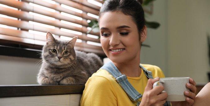 「猫OK」の集合住宅でもするべき気遣い5つ