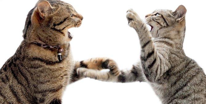 猫が喧嘩で怪我をした!治療法や対処法、応急処置方法を知ろう