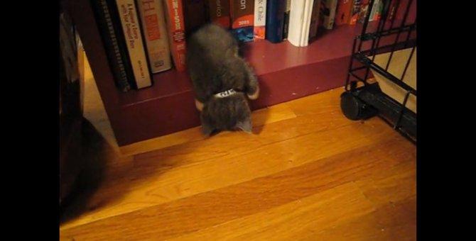 「Zzz…は!ね、寝てにゃいよ!」あくまでもシラを切り通す猫ちゃん