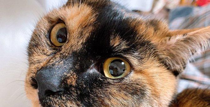 猫の『わかりにくい愛情表現』3選!こんな仕草をしていたら愛のサインかも?