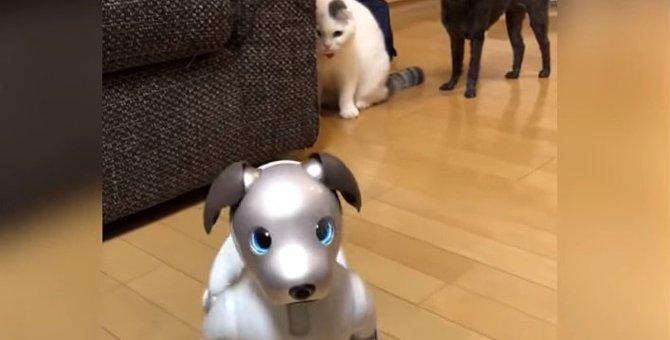猫がロボット犬と初対面したら?