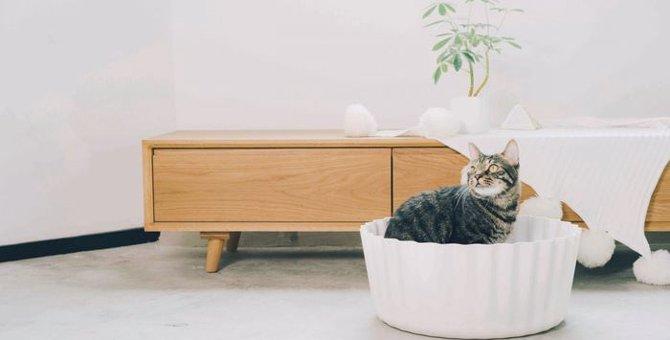 【11/2開催】大塚家具の無料セミナーで猫との暮らし方を学ぼう