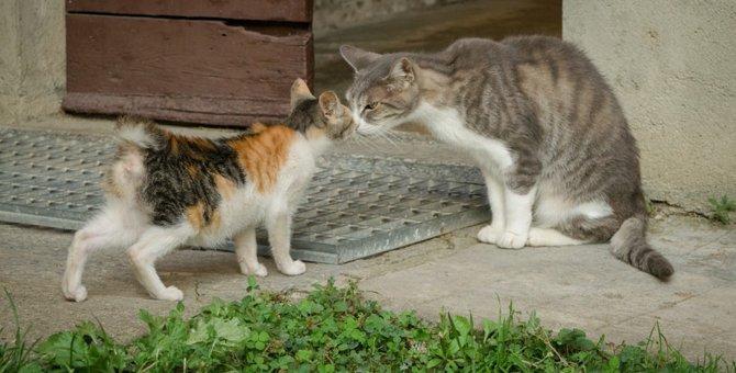 猫の縄張り争いについて その原因と決着のルール