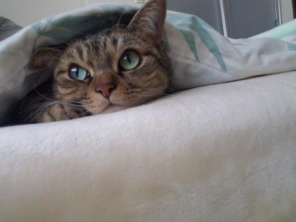 寒がり猫を温めるおすすめグッズと注意点2つ