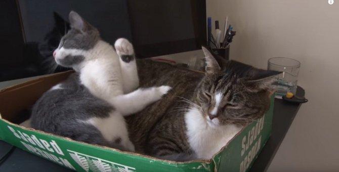 プロが教える!猫の悪い習慣対策|猫にスゴ技を教えた超人のレッスン
