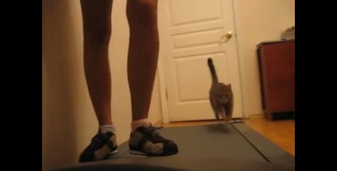 どうして止まったのに後ろに動くにゃ?飼い主さんとランニングマシーンに挑戦する猫ちゃん!