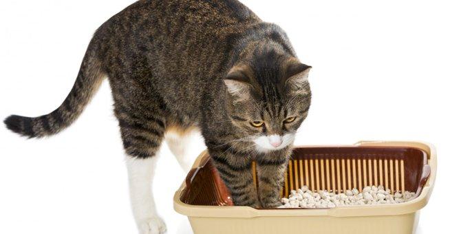 猫砂選びの2つのポイントとオススメ3種