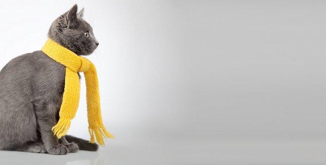 寒い日が続く冬、猫がなりやすい3つの病気とは?