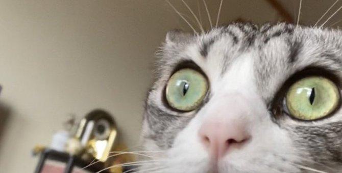 超やり手!お口に証拠をつけたまま黙秘を続ける話題の猫に釘付け