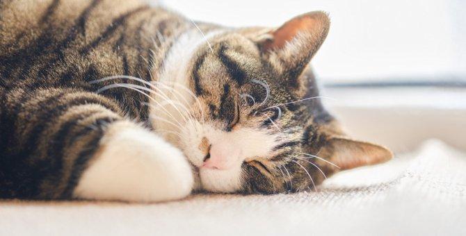 『寝ている猫』に絶対しちゃダメなこと3選