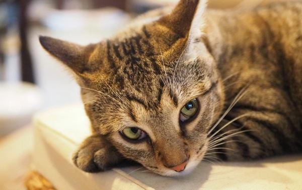 猫の機嫌を悪くする飼い主の気まぐれ行動4つ