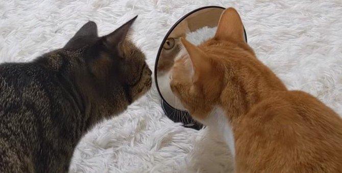 「誰かいるにゃ」鏡の中に映る自分に困惑する猫ちゃん