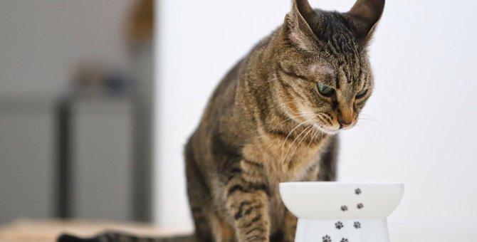 猫が『少食』になる4つの理由と対策