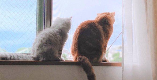 LAYLAの12猫占い【9/7~9/13】のあなたと猫ちゃんの運勢