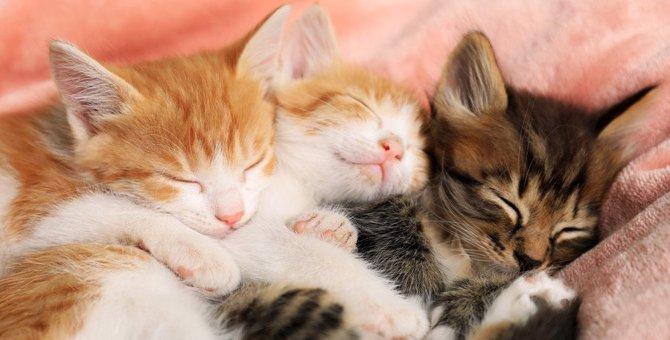 猫が『睡眠妨害』を受けると起こるトラブル4つ